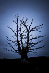 Knorriger Kahler Baum